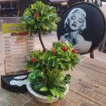 Заведение в Благоевград | Кафе-аперитив Айсберг